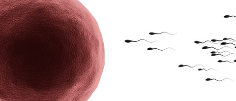 sperm racing towards the egg